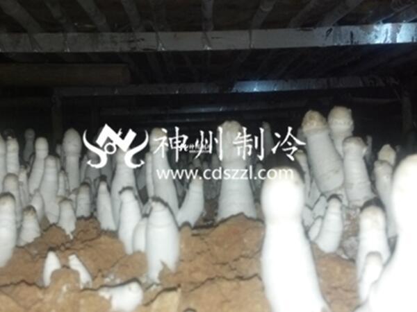 大邑食用菌